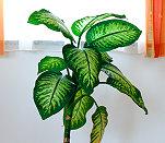 Die Grune Leber Zimmerpflanzen